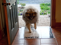 bruno walking on paws mat4.jpg